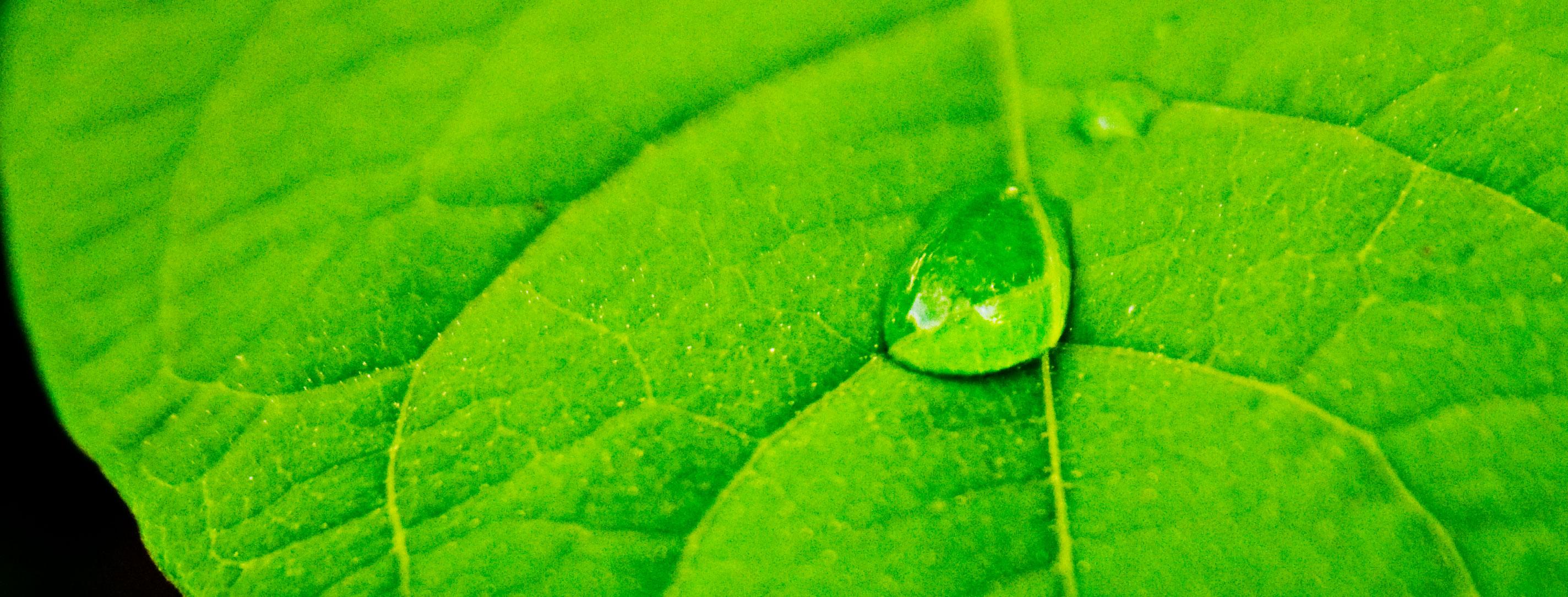 green benefits eco friendly